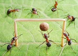 Πάρτε 10 τρόπους για να αποχαιρετίσετε τα μυρμήγκια από το σπίτι σας και μάλιστα φυσικά!