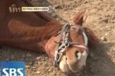 Δείτε τι κάνει αυτό το άλογο κάθε φορά που κάποιος προσπαθεί να το ιππεύσει!